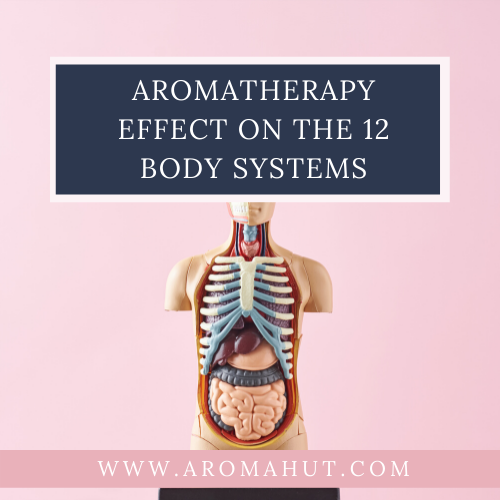 Aromatherapy-Effects-on-the-Body-Systems-_-Aroma-Hut-Institute
